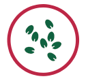 icon-sementes